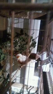 Oiseau pinson
