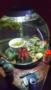 16 gal bio orb with  fish amd accesseries