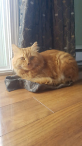 Ginger kitty looking for new home