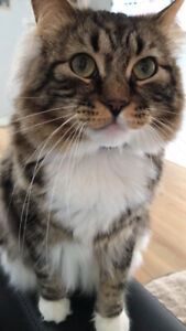 Friendly male cat for rehoming