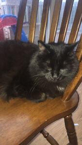 8 Year Old Brothers Need Forever Home ! St. John's Newfoundland image 4