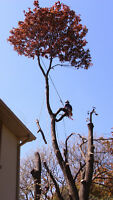 ◎◎◎Harmony Tree Service◎◎◎ in your Area ☎4168448484