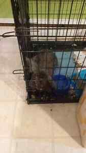 Selling my rabbit