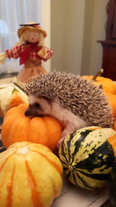 Baby Hedgehogs!! Put your name on the list!!