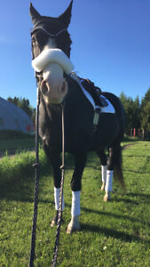 """Registered APHA Mare For Sale - Truly Dynamic aka """"Cessna"""""""