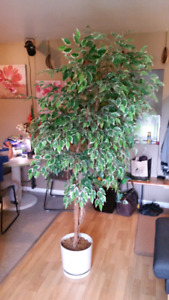 Plante ( arbre ) artificielle 8 pied