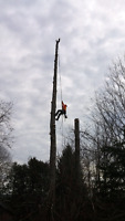FULLY INSURED TREE REMOVAL