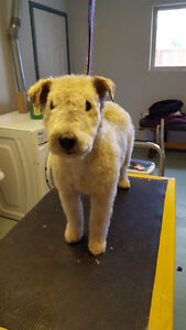 Mobile Pet Grooming Services In The Comfort Of Your Own Home Edmonton Edmonton Area image 4