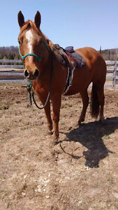 Horses for quick Sale:
