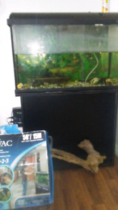Fish tank and algae eater