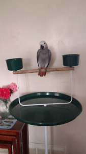 Large Parrot Stand good condition