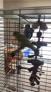 Birds looking for a new home