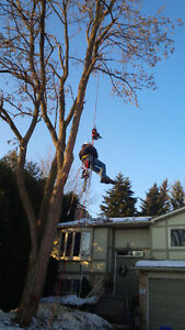 PROFESSIONAL TREE SERVICES/ALL SEASON TREE SPECIALISTS Stratford Kitchener Area image 1