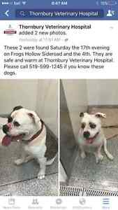 2 dogs found in Meaford Area