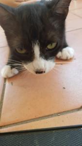 Mum cat Domestic