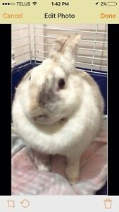 Female bunny free to a good home