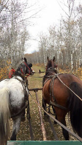 Trail rides, wagon rides, birthday parties, and much much more Moose Jaw Regina Area image 4
