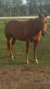 6 yr old Mare
