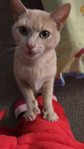Free 3 years cat for rehoming