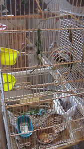Zebra Finches with Tall Cage Peterborough Peterborough Area image 6