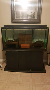 Fishtank, stand and filter