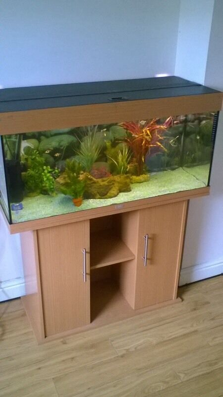 Juwel Rio 180L Tropical Fish Tank Setupin Morpeth, NorthumberlandGumtree - Juwel Rio 180L Tank and stand Comes with all of the below Juwel Rio 180L Tank Juwel Rio Fitted Stand Original working lights Internal Filter Tropical Heater Decorative Background Gravel Decorations not included. Tank has been repaired on bottom glass...