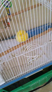 Australian bird with beautiful cage for sale