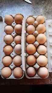 Free range organic farm eggs
