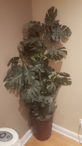 Artificial Money Plant about 5 Feet Tall with bottom basket
