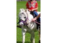 Lead rein pony for loan