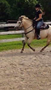 Professional Horse Training Available 1 Spot For May 1