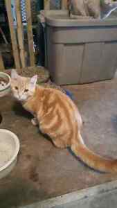 Acreage kittens and cats to give away