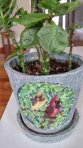 Lovely 2 birds plant pot with free flower plant