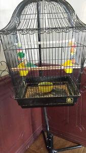 Inséparable et cage à vendre