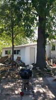 $1000 to whoever will cut down two trees and trim 2 others