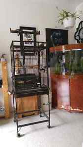 5 mnth lovebird with parrot cage for sale 175.00