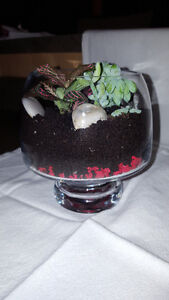 Glass terranium (planted)