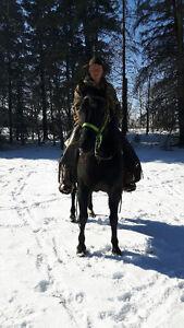 Black Saddle Horse