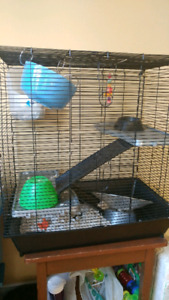 Fancy Rat and 3 Story Rat Cage + Accessories
