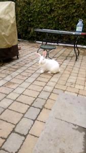 Giant Flemish bunnies