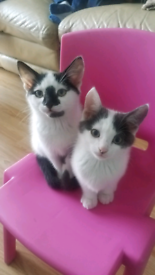 # 3 GORGEOUS KITTENS FOR SALE #