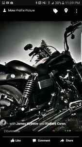 2008 Harley Davidson Street Bob