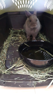 Beautiful baby bunny needs home with other rabbits.