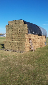 HAY 1st cut small squares