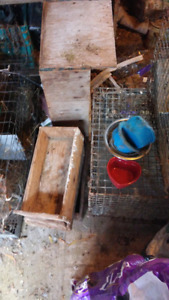 Rabbit \ Chicken cages and accesories $100 or BO