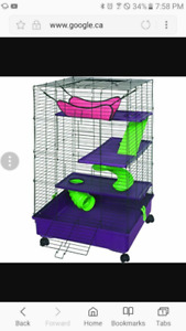 2 female rats and large cage