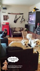 SMALL DOG RESORT IN HOME OF A CERTIFIED TRAINER West Island Greater Montréal image 7