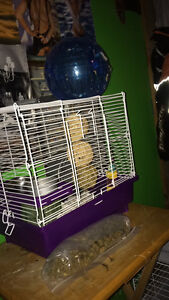 Male Syrian hamster 4months old