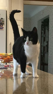 Missing cat from modeland and Cathcart area in sarnia