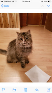 FOUND CAT MONTREAL